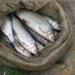Izumitelnaya malosolenaya ryiba 150x150 Изумительная малосоленая рыба