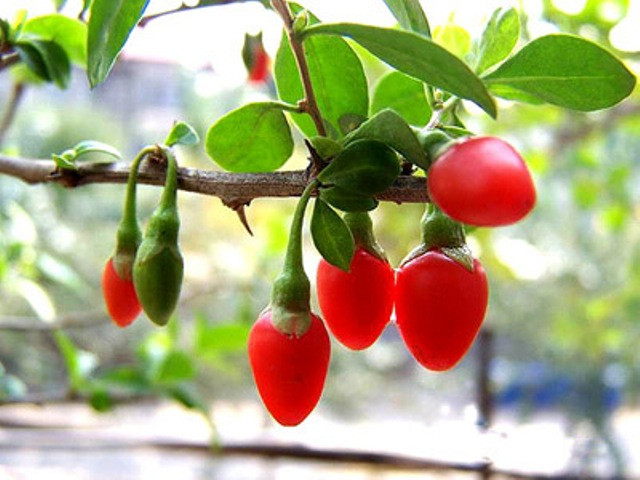 YAgodyi Godzhi stabilnoe pohudenie Коктейль с семенами льна и ягодами Годжи