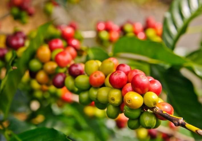Zerna zelenogo kofe Для чего в доме нужна кофемолка