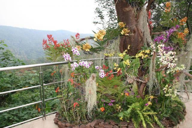 Botanicheskiy sad korolevyi Sirikit v Tailande Royal Hotel Sanremo   отель и казино в городе цветов и музыки