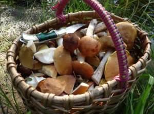 Gribyi i ih poleznyie svoystva dlya nashego organizma Заморозка или способ заготовки грибов на зиму