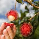 Volosatyiy frukt Rambutan 150x150 Как надо выбирать помело