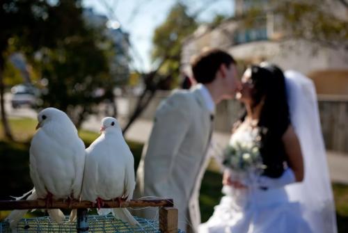 Belyie golubi na svadebnyie meropriyatiya v Moskve Белые голуби на свадебные мероприятия в Москве